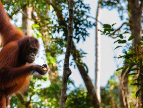 10 naturalnych cudów Indonezij- Tanjung Puting National Park