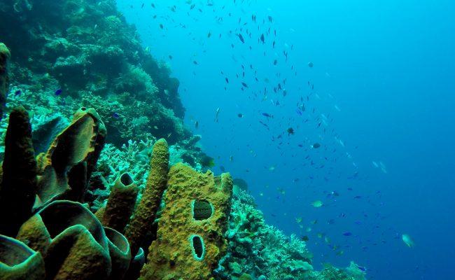 pod woda 1