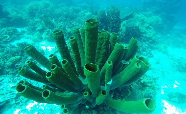 podwoda1