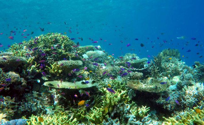 pod woda 2