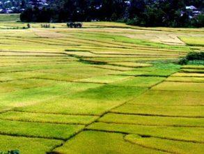 Pajęczynowe tarasy ryżowe