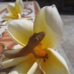 Odpoczynek na kwiatku