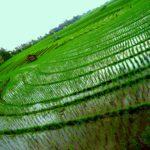 Balijskie piękności