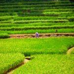Rolnik na Bali