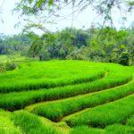Balijskie tarasy