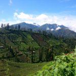Jawajskie tarasy